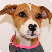 Adopt A Pet :: Loki~ meet me~ - Glastonbury, CT