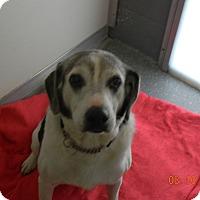 Adopt A Pet :: SPARKY - Sandusky, OH