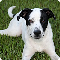 Adopt A Pet :: Soldier - Natchitoches, LA
