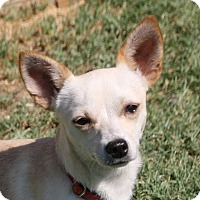 Adopt A Pet :: Chad - Edmonton, AB