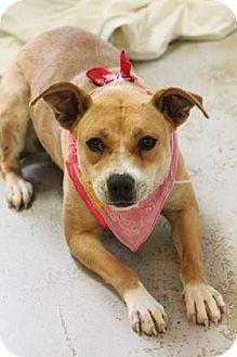 Labrador Retriever/Retriever (Unknown Type) Mix Dog for adoption in Lebanon, Connecticut - Trixie