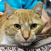 Adopt A Pet :: Copper - Basehor, KS