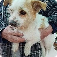 Adopt A Pet :: Sirius - Apple Valley, CA