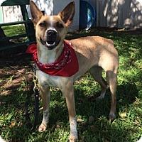 Adopt A Pet :: McKenny - San Leon, TX