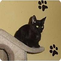 Adopt A Pet :: Licorice - Barnegat, NJ