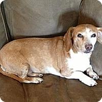Adopt A Pet :: CINNAMON - Portland, OR
