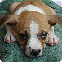Adopt A Pet :: Ari - Charlotte, NC