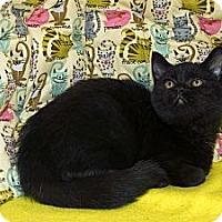 Adopt A Pet :: Gypsy - New Port Richey, FL