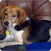 Adopt A Pet :: Spike - Novi, MI