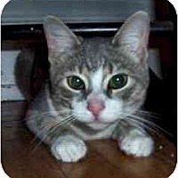 Adopt A Pet :: Scotty--adopted!! - New Richmond, OH