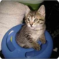 Adopt A Pet :: Lobo - Jacksonville, FL