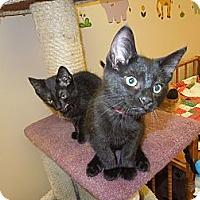 Adopt A Pet :: Kathleen - Medina, OH