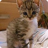 Adopt A Pet :: Becka - Reston, VA