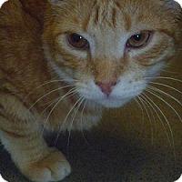 Adopt A Pet :: Nacho - Hamburg, NY
