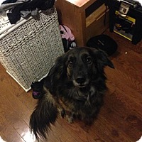 Adopt A Pet :: Jazzy - Northumberland, ON