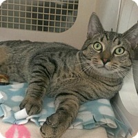 Adopt A Pet :: Cinnamon - Stafford, VA