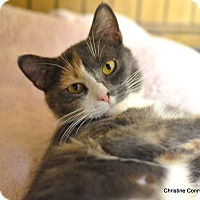 Adopt A Pet :: Dutchess - Island Park, NY