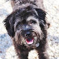 Adopt A Pet :: Bailey - Smyrna, GA