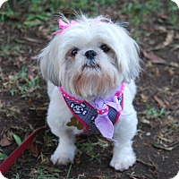 Adopt A Pet :: ORCHID - Los Angeles, CA