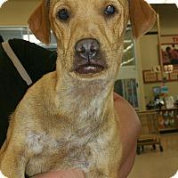 Adopt A Pet :: WINSTON - Rancho Cucamonga, CA