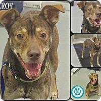 Adopt A Pet :: Elroy - Kimberton, PA