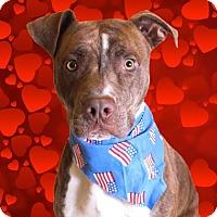 Adopt A Pet :: Brutus - Chico, CA