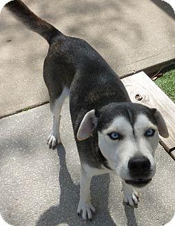 Dog Rescue Inverness Fl