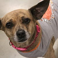 Adopt A Pet :: Lucy - Rosamond, CA