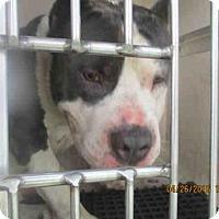 Adopt A Pet :: A379361 - San Antonio, TX