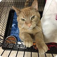 Adopt A Pet :: Tyler - Medina, OH