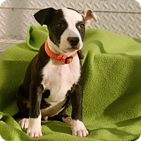 Adopt A Pet :: Cher - Los Angeles, CA