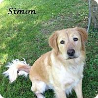 Adopt A Pet :: Simon - Bartonsville, PA