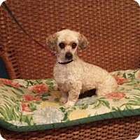 Adopt A Pet :: Sophia - Tulsa, OK