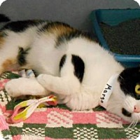 Adopt A Pet :: Margo - Oskaloosa, IA