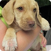 Adopt A Pet :: S985-G  Hildi - Bay Springs, MS