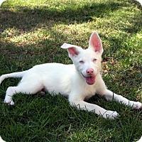 Adopt A Pet :: Jerry - Downey, CA