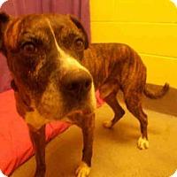 Adopt A Pet :: *CRUSH - Upper Marlboro, MD