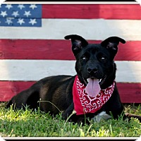 Adopt A Pet :: Mocha - Madionsville, KY