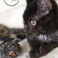 Adopt A Pet :: Joel - Belton, MO
