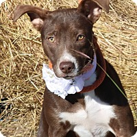 Adopt A Pet :: Harmony - Pluckemin, NJ