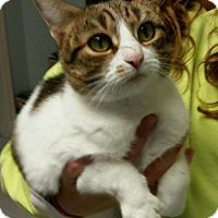 Adopt A Pet :: BoBo (Bodacious) - Port Clinton, OH
