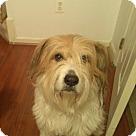 Adopt A Pet :: Tyson (COURTESY POST)