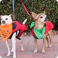 Adopt A Pet :: PEANUT and POPCORN (CATS OK) - Las Vegas, NV