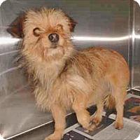 Adopt A Pet :: Skittles - Encino, CA