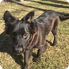 Adopt A Pet :: Wrigley - No Longer Accepting Applications