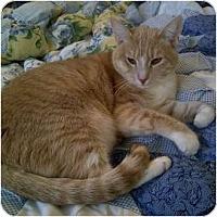 Adopt A Pet :: Hapuna - Brea, CA