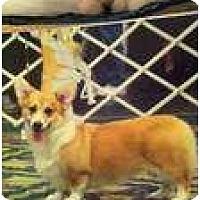 Adopt A Pet :: Mia - Inola, OK
