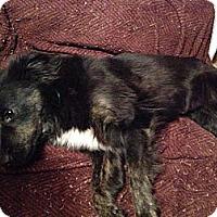 Adopt A Pet :: Marci - Homewood, AL