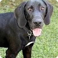 Adopt A Pet :: Nicholas - Sun Valley, CA