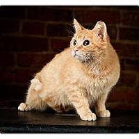 Adopt A Pet :: Tabitha - Owensboro, KY